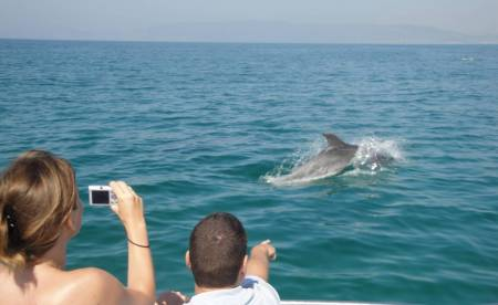 Arrábida: Half-Day Dolphin Watching Boat Tour From Sesimbra