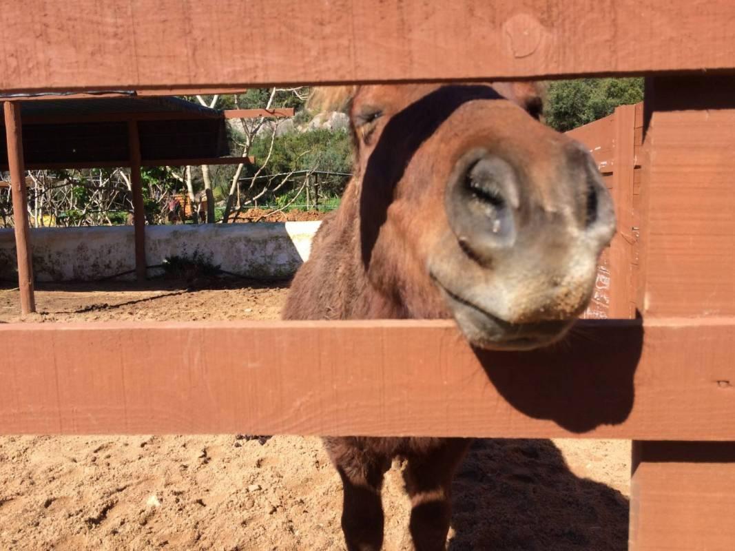 Pony Ride In The Algarve