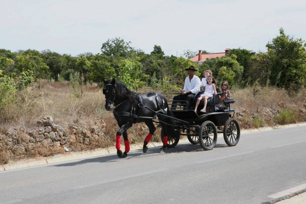 Horse Carriage Ride Tour In The Algarve
