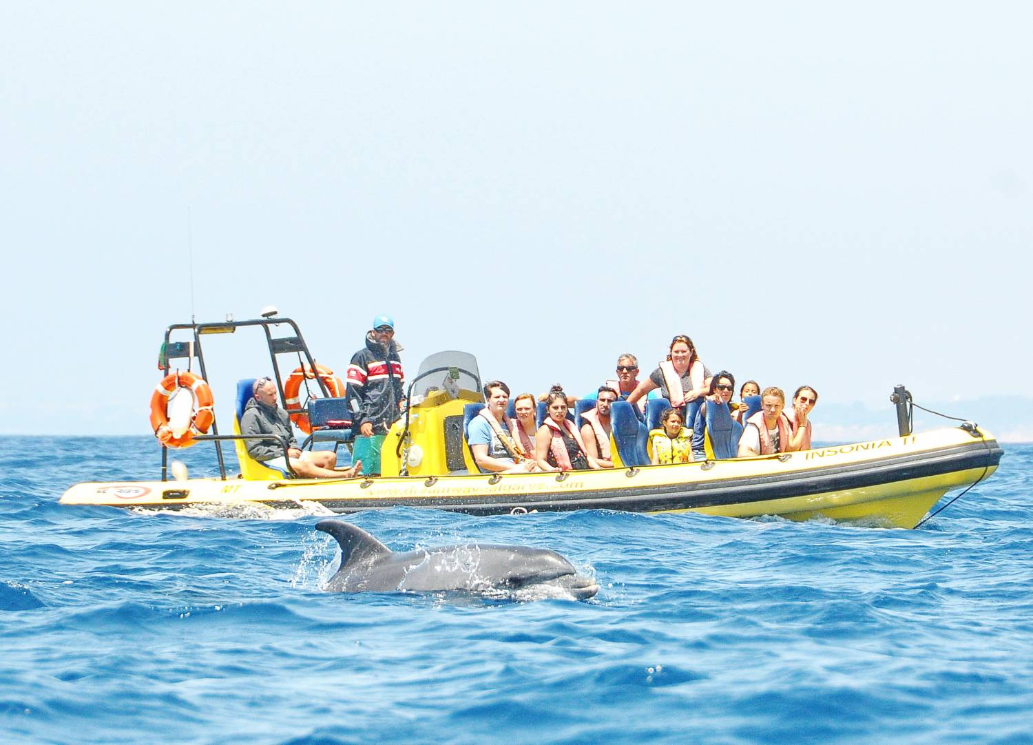 Exciting semirigid watching dolphins