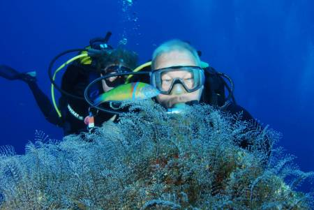 Diving On The Island Of Madeira