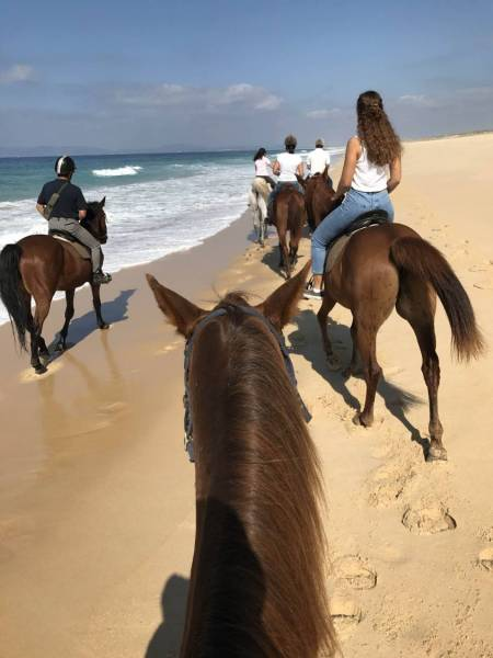 From Lisbon: Private Horseback Riding Tour On The Comporta Beach