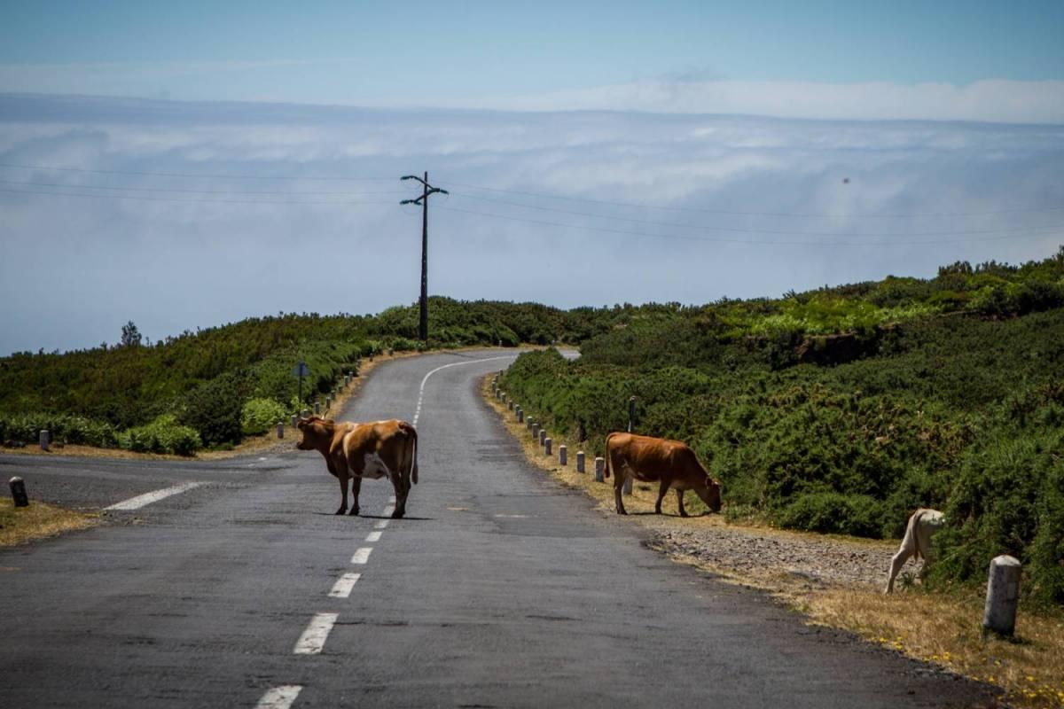 Madeira Island West Coast Private Tour
