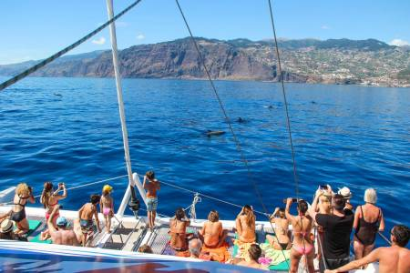 Dolphin And Whale Watching In Madeira Island