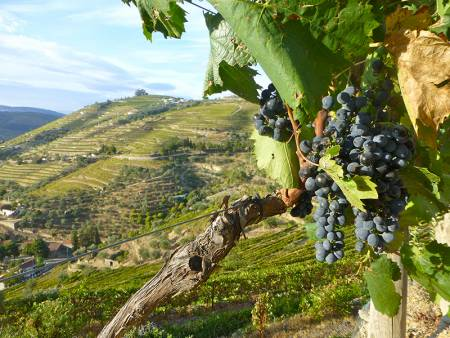 Porto: Full-Day Tour To The Wine Region Of Douro Valley