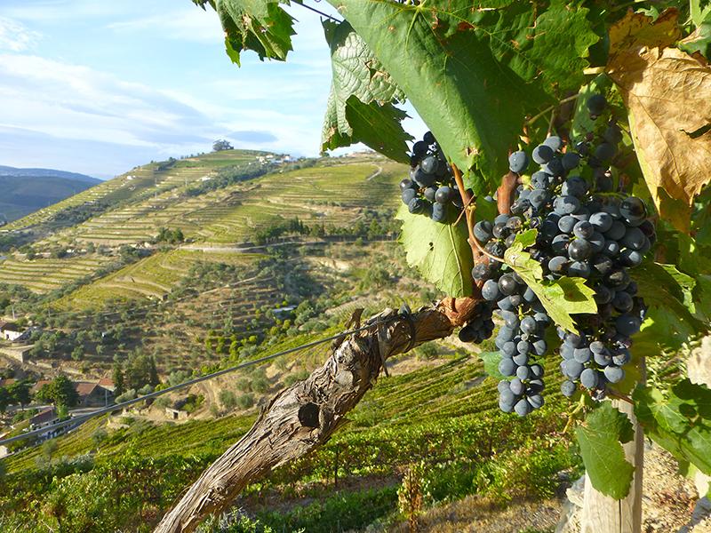 Region Vinícola del Duero