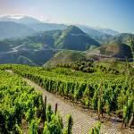 Vin du Douro