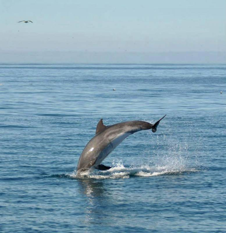 Dolphins Algarve