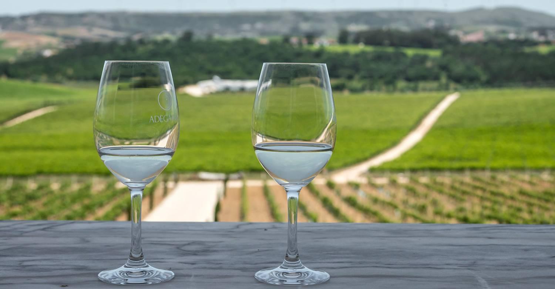 Wine Lovers Lisbon