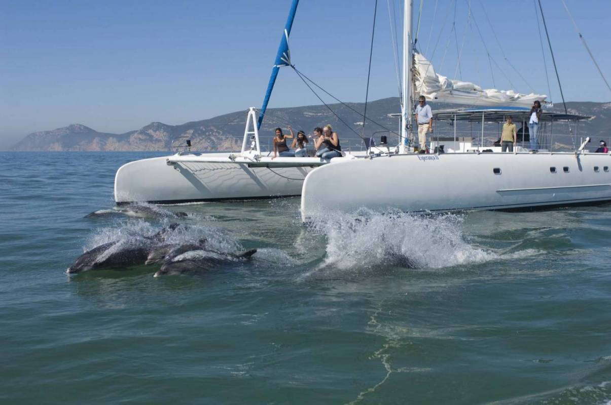 Golfinhos no Sado