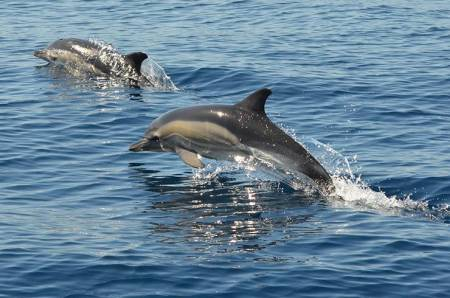 Albufeira: 4X4 Safari Tour + Boat Trip To The Benagil Caves And Dolphin Watching
