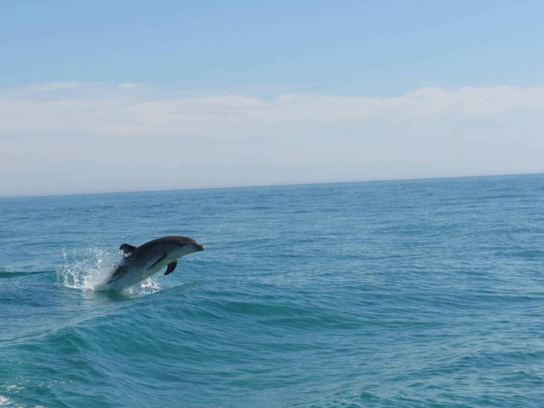 Dolphin Watching In Sado Bay, Setúbal