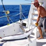 Marlin Fishing