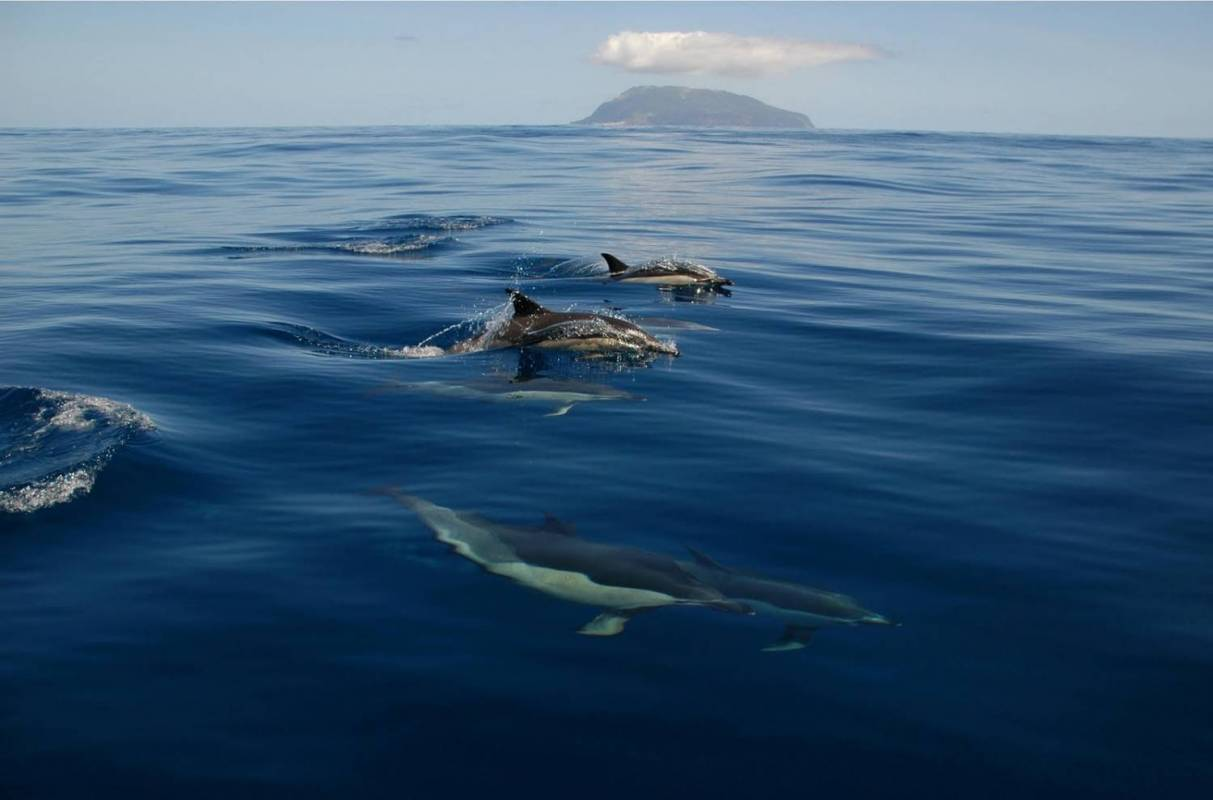 Azores Whale Watching