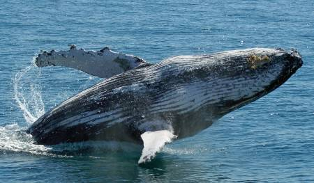 Whale Watch Tour - Australia