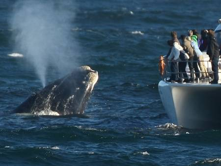 Whale Watching Tour From Hermanus – South Africa