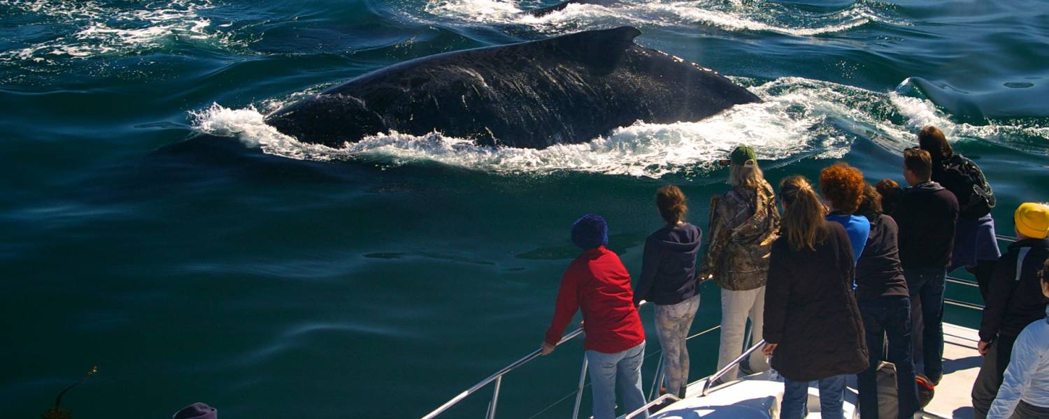Whale Watching Tour From Hermanus South Africa