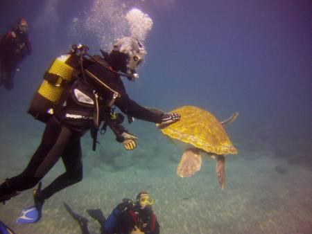 Curso Padi – Identificação De Peixe – Tenerife