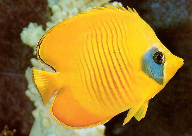 Identificação de Peixes Tenerife