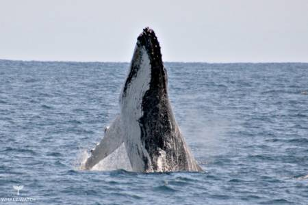 Whale Watch Experience - Perth - Australia
