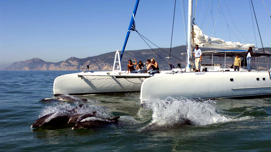Dolphin Watch Cruise - Arrábida, Sesimbra, Setúbal