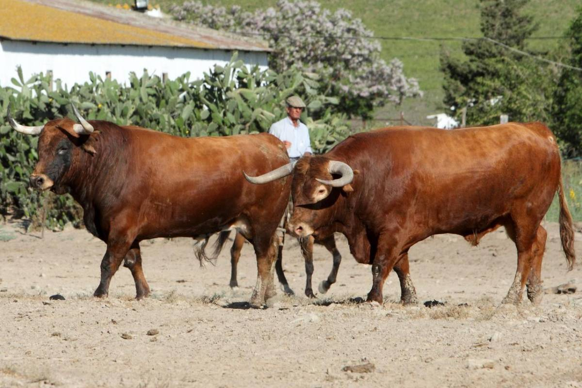 From Cádiz: Wild Bulls And Medina Sidonia