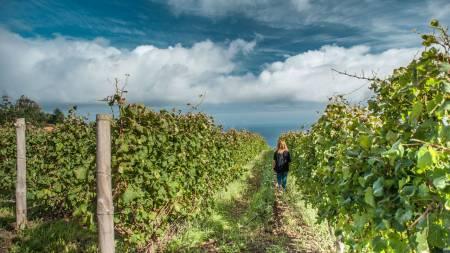 Madeira Island Wine Tour