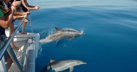 Aventura Ecológica Na Ilha De Fraser – Austrália