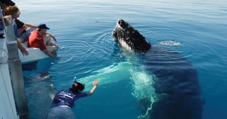 Encontro Exclusivo De Observação De Baleias – Austrália