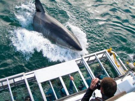 Shark Cage Diving In Gansbaai – (Self Drive) – South Africa