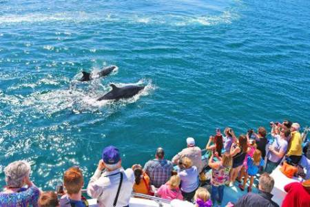 Whale Watching & Dolphin Cruise - Newport Beach, California
