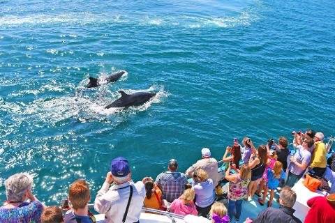 Newport Beach Whale Watching Cruise