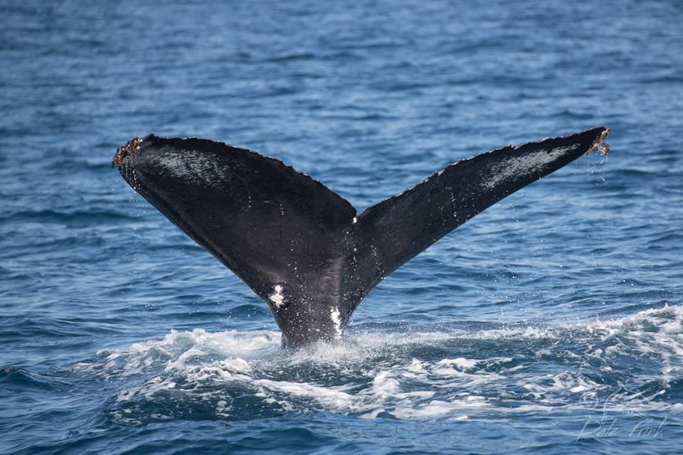 Croisi re d 39 observation des baleines et des dauphins for Chaise du capitaine