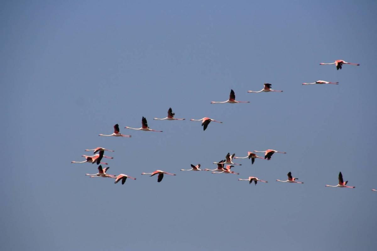 Birdwatching In The Algarve's Ria Formosa