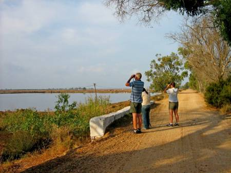 Birdwatching In The Algarve's Ria Formosa