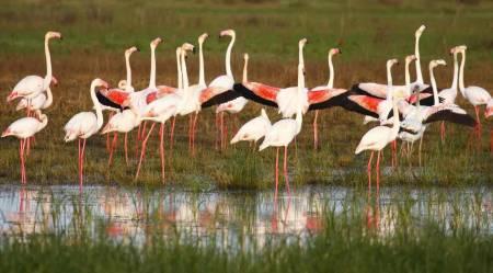 Doñana Nature Reserve