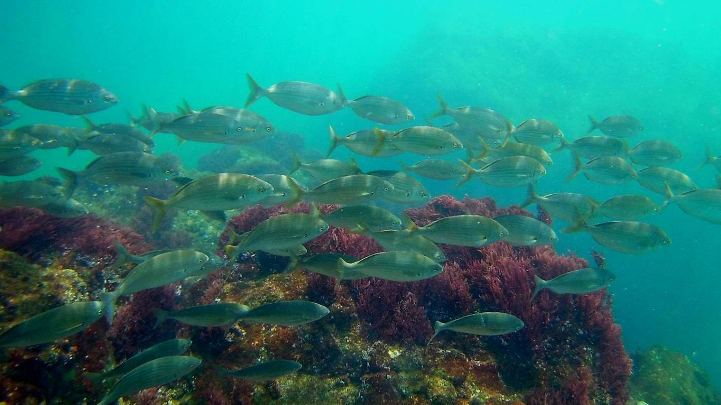 Catamaran Tour - See The Bottom Of The Sea – Peniche