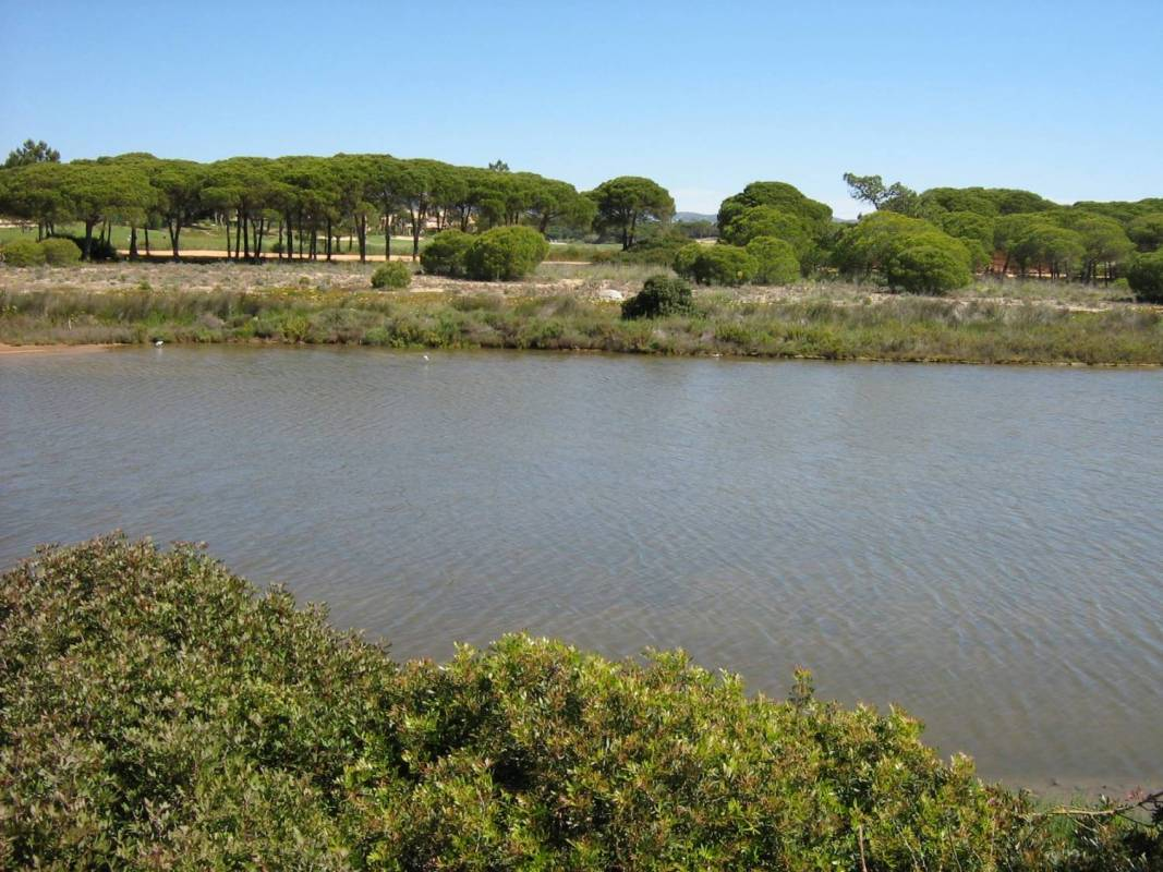 Birdwatching In The Algarve's Ria FormosaBirdwatching In The Algarve's Ria Formosa