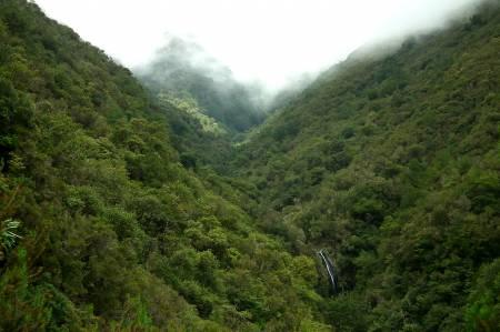 Laurissilva Florest Madeira