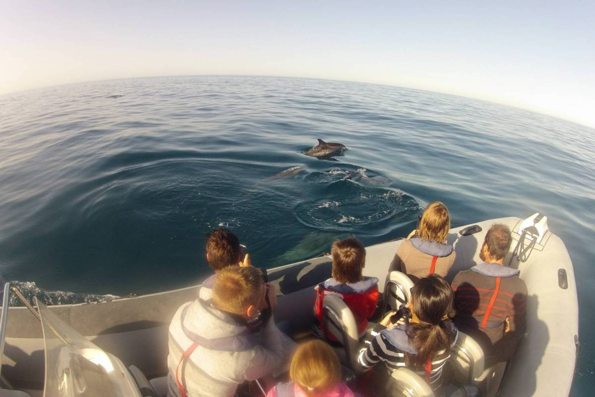 Dolphin Watching In The Algarve