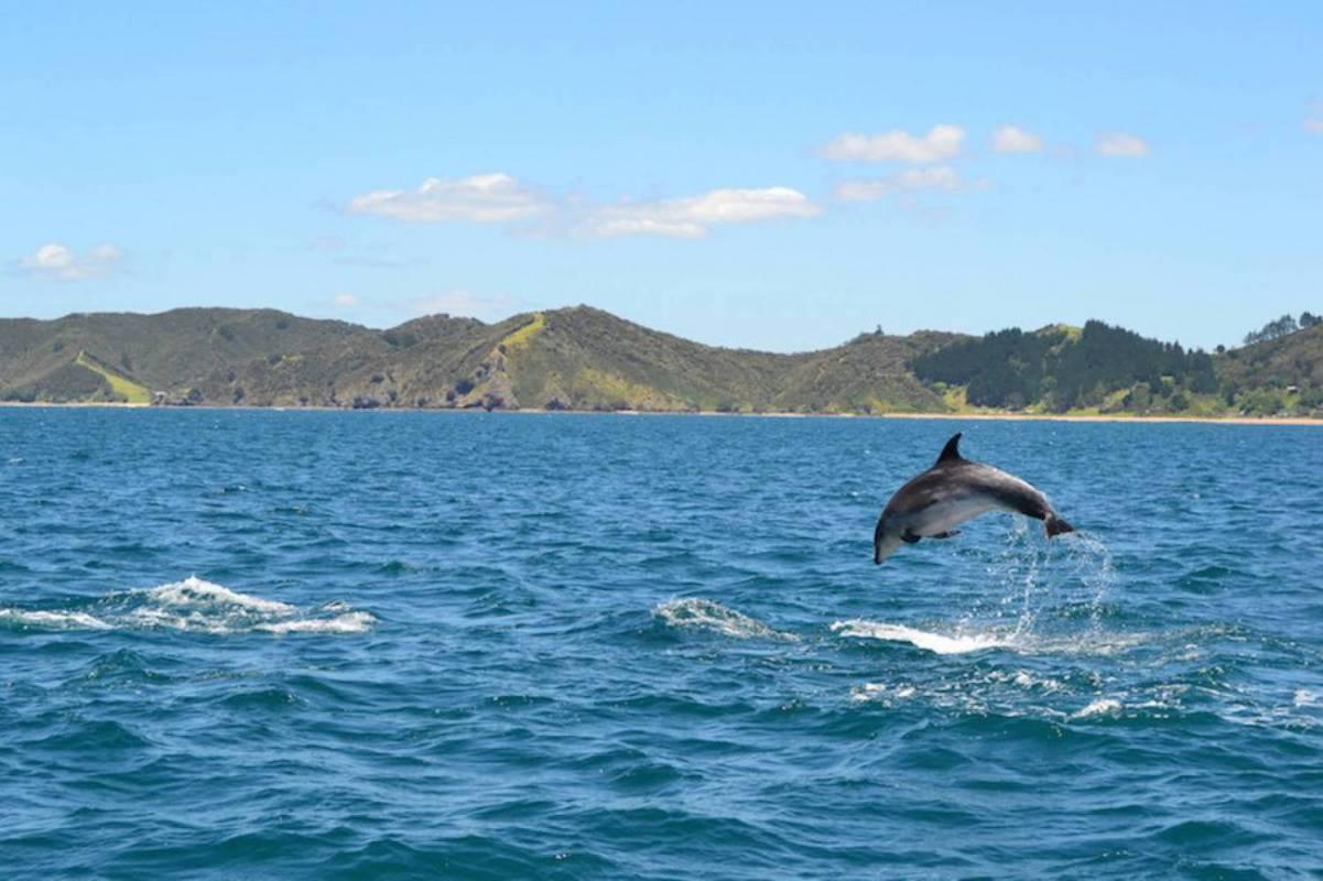 The Rock Adventure Day Cruise Paihia New Zealand