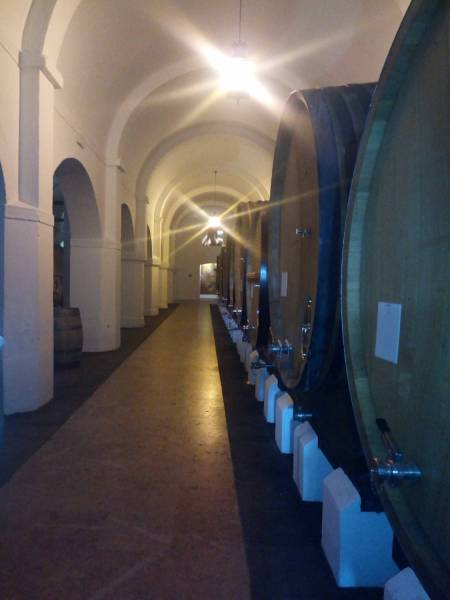 Évora Private Tour - Wine Tourism