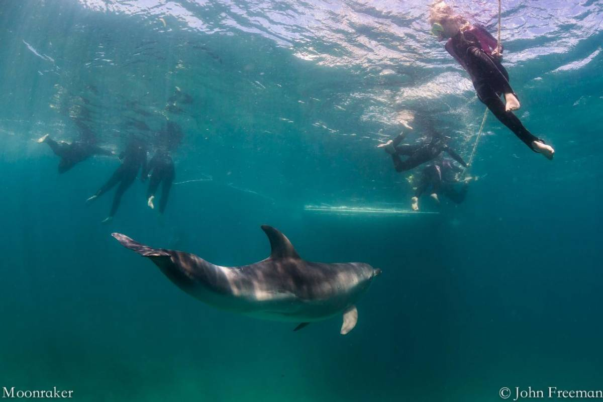 Dolphin And Seal Swim - Sorrento, Vic