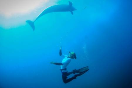 3 Hour Dolphin And Seal Swim – Sorrento, Vic