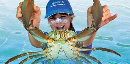 Catch A Crab Tour Including Seafood Basket Lunch – Tweed Heads, Nsw