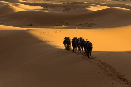 Photo Safari To Morocco: Sahara Desert And Marrakesh
