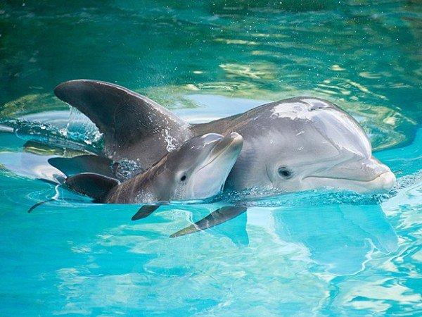 Dolphin Route - Setubal