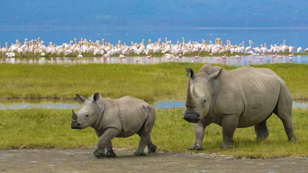 Revenir à Tanzanie