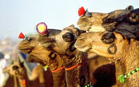 Rajasthan Tour – Glimpse Of Rajasthan – 12 Days