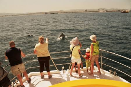 Dolphin Watching Tour In Strait Of Gibraltar